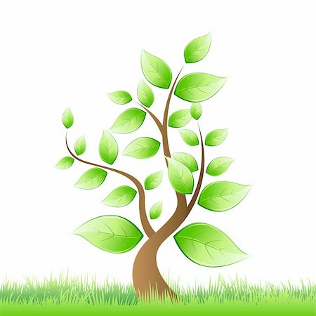 illustration of vector tree growing in grass Stock Photo - Budget Royalty-Free & Subscription, Code: 400-04213722