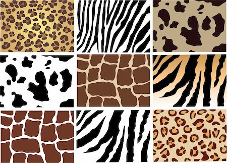 skin of different animals Stock Photo - Budget Royalty-Free & Subscription, Code: 400-04223347