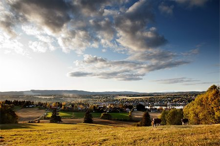 A rural landscape in Norway with cows and a small village Stock Photo - Budget Royalty-Free & Subscription, Code: 400-04258452