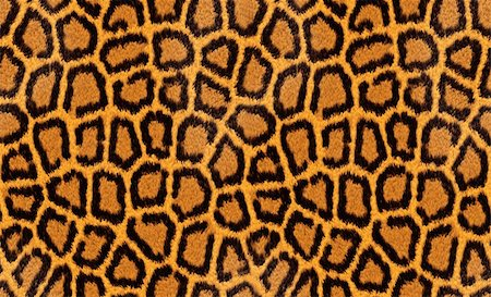 abstract texture of leopard fur Stock Photo - Budget Royalty-Free & Subscription, Code: 400-04259661