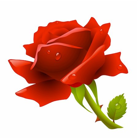 Red rose Stock Photo - Budget Royalty-Free & Subscription, Code: 400-04266027