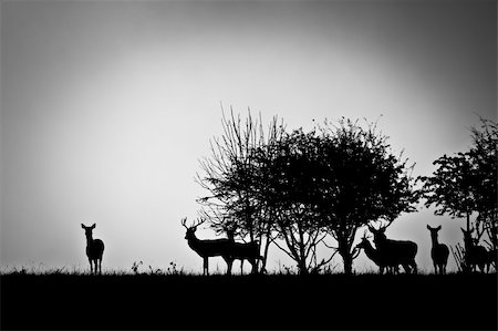 deer hunt - An image of some deer in the morning mist Stock Photo - Budget Royalty-Free & Subscription, Code: 400-04275264