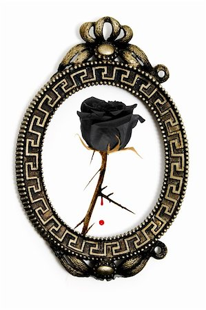 a black rose in a vintage frame on a white background Stock Photo - Budget Royalty-Free & Subscription, Code: 400-04276009