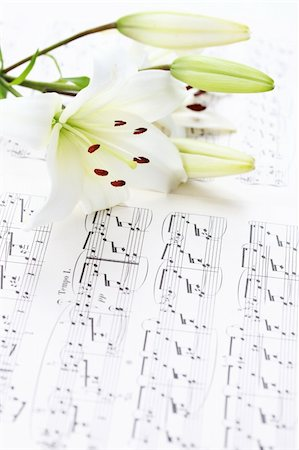 Music notes with white lily flower Stock Photo - Budget Royalty-Free & Subscription, Code: 400-04277869