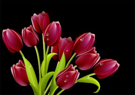 Bunch of red tulips isolated on black background Stock Photo - Budget Royalty-Free & Subscription, Code: 400-04285347