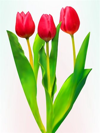 Three tulips. EPS 8 vector file included Stock Photo - Budget Royalty-Free & Subscription, Code: 400-04281896