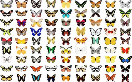 Illustration different butterfly in vector. Stock Photo - Budget Royalty-Free & Subscription, Code: 400-04299350