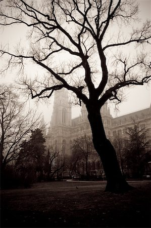 Tree in front of the city hall building of Vienna, Austria Stock Photo - Budget Royalty-Free & Subscription, Code: 400-04291675