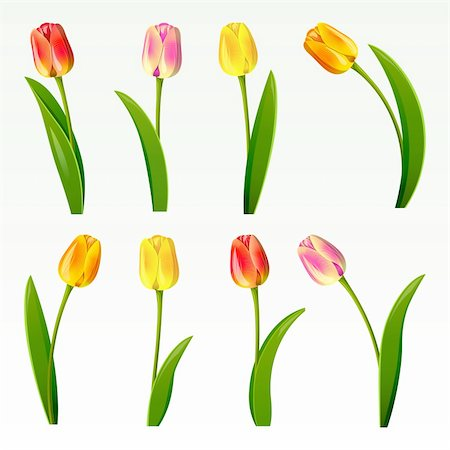Set from eight tulips on a white background Stock Photo - Budget Royalty-Free & Subscription, Code: 400-04306159