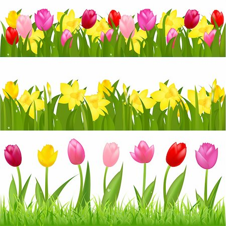 florist vector - 3 Flower Borders From Tulips And Narcissuses, Isolated On White Background, Vector Illustration Stock Photo - Budget Royalty-Free & Subscription, Code: 400-04314301