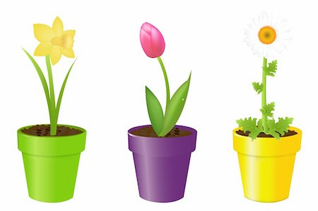 florist vector - 3 Flowers In Pots, Tulip, Narcissus And Camomile, Isolated On White Background, Vector Illustration Stock Photo - Budget Royalty-Free & Subscription, Code: 400-04314303