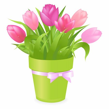 florist vector - Bouquet Of Multicolored Tulips In Green Pot, Isolated On White Background, Vector Illustration Stock Photo - Budget Royalty-Free & Subscription, Code: 400-04314361