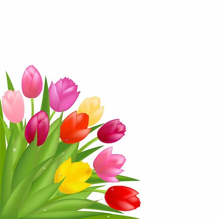florist vector - Bouquet Of Multicolored Tulips, Isolated On White Background, Vector Illustration Stock Photo - Budget Royalty-Free & Subscription, Code: 400-04314413