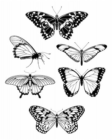 A set of beautiful stylized butterfly outline silhouettes Stock Photo - Budget Royalty-Free & Subscription, Code: 400-04314804