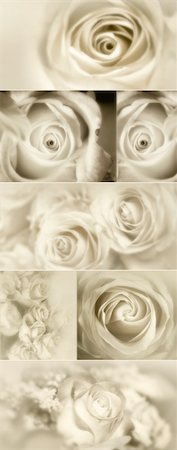 decoration wedding rose vintage - Roses Collage from photos in sepia Stock Photo - Budget Royalty-Free & Subscription, Code: 400-04316941