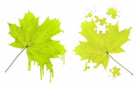 pouring paint art - Maple leaf in paint droplets and puzzles Stock Photo - Budget Royalty-Free & Subscription, Code: 400-04318124