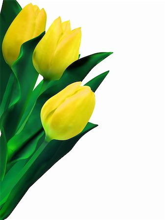 florist vector - Bunch of beautiful spring flowers - yellow tulips against white background. EPS 8 vector file included Stock Photo - Budget Royalty-Free & Subscription, Code: 400-04318385
