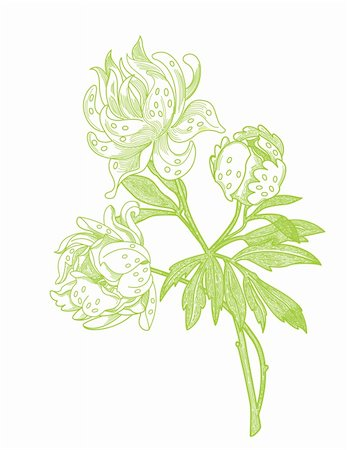 peony illustrations - Delicate vintage style line illustration of a peony flower. Global colour used. This is a vector file which requires a program such as Adobe Illustrator, Macromedia Freehand, or CorelDraw to modify. File is scalable to any size with the correct software. Stock Photo - Budget Royalty-Free & Subscription, Code: 400-04323875