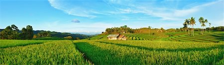 philippine terrace farming - Panorama of the paddy rice field. Philippines Stock Photo - Budget Royalty-Free & Subscription, Code: 400-04334269