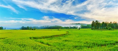 philippine terrace farming - Panorama of the paddy rice field. Philippines Stock Photo - Budget Royalty-Free & Subscription, Code: 400-04339278