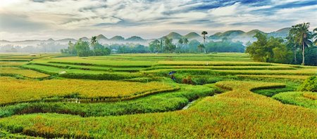 philippine terrace farming - Panorama of the paddy rice field. Philippines Stock Photo - Budget Royalty-Free & Subscription, Code: 400-04344688