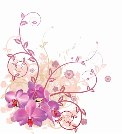 A very stylish vector floral background illustration with pink orchid flowers. Stock Photo - Budget Royalty-Free & Subscription, Code: 400-04347087