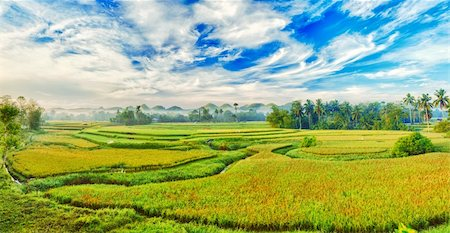 philippine terrace farming - Panorama of the paddy rice field. Philippines Stock Photo - Budget Royalty-Free & Subscription, Code: 400-04349207