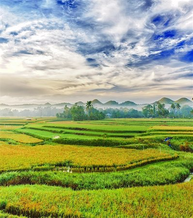 philippine terrace farming - Panorama of the paddy rice field. Philippines Stock Photo - Budget Royalty-Free & Subscription, Code: 400-04341041