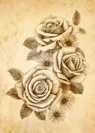 Old-styled rose. Freehand drawing Stock Photo - Budget Royalty-Free & Subscription, Code: 400-04354440