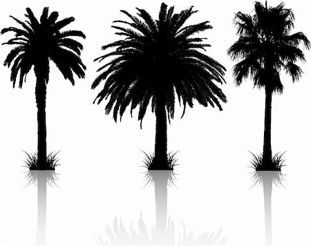 Silhouettes of 3 different palm trees with reflections Stock Photo - Budget Royalty-Free & Subscription, Code: 400-04359826