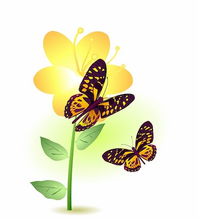 Vector illustration of a yellow flower with two butterflies flying around Stock Photo - Budget Royalty-Free & Subscription, Code: 400-04367183