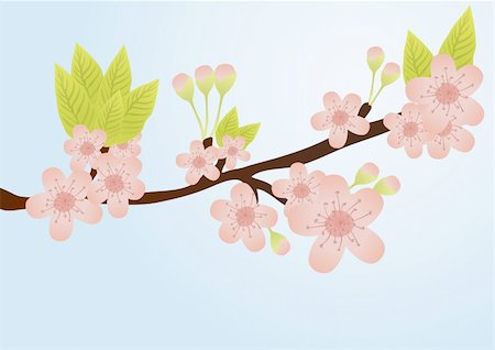 Vector illustration of cherry-tree branch with flowers isolated on blue Stock Photo - Budget Royalty-Free & Subscription, Code: 400-04367214
