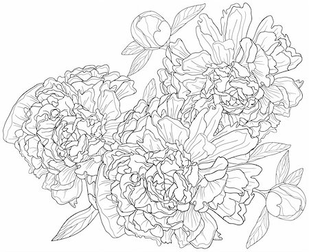 peony illustration black and white - Vector illustration of monochrome background with peonies Stock Photo - Budget Royalty-Free & Subscription, Code: 400-04367215
