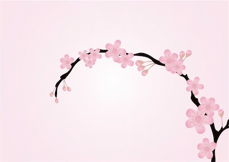 simsearch:400-04367215,k - Vector illustration of cherry-tree branch isolated on pink Stock Photo - Budget Royalty-Free & Subscription, Code: 400-04367217