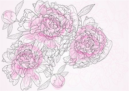peony illustrations - Vector illustration of beautiful floral background with pink peonies Stock Photo - Budget Royalty-Free & Subscription, Code: 400-04367218