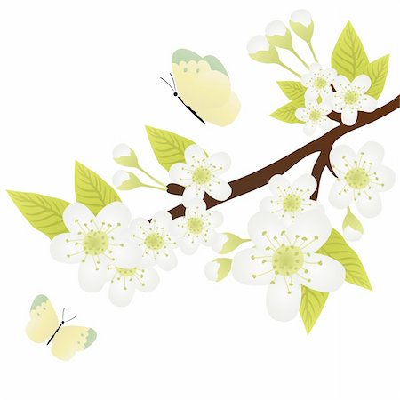 Vector illustration of apple-tree branch with flowers and butterflies fluttering over it Stock Photo - Budget Royalty-Free & Subscription, Code: 400-04367210
