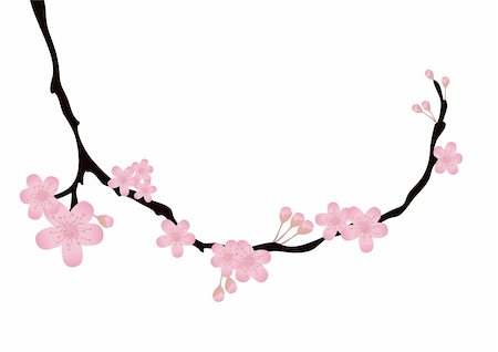 simsearch:400-04367215,k - Vector illustration of cherry-tree branch with flowers in bloom Stock Photo - Budget Royalty-Free & Subscription, Code: 400-04367212