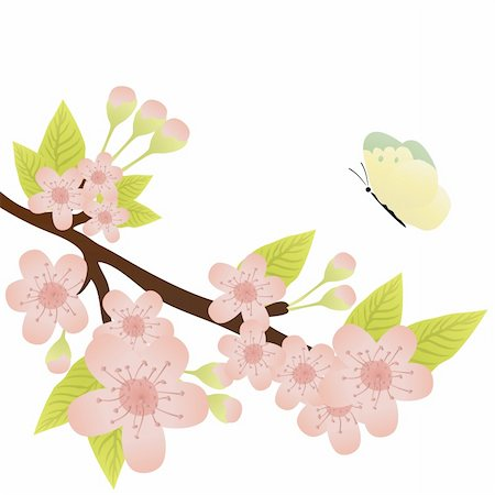 Vector illustration of cherry-tree branch in bloom and a butterfly Stock Photo - Budget Royalty-Free & Subscription, Code: 400-04367220