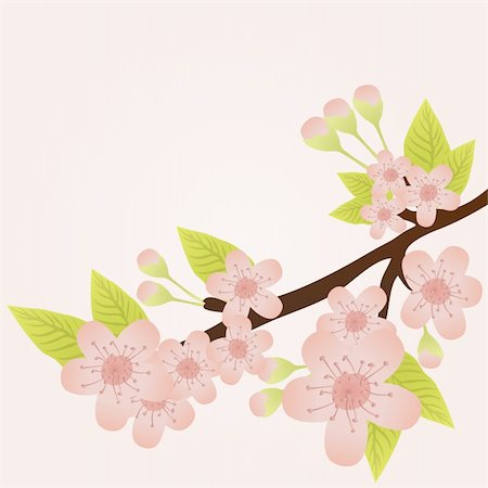 Vector illustration of cherry-tree branch in bloom isolated on pink Stock Photo - Budget Royalty-Free & Subscription, Code: 400-04367221