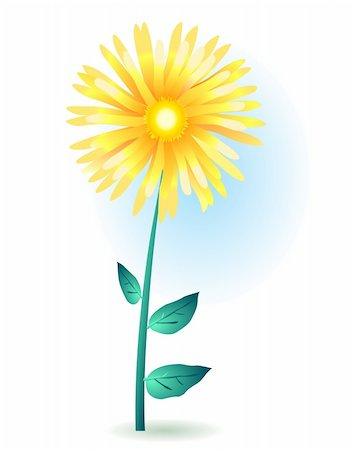 simsearch:400-04367215,k - Vector illustration of a yellow gerbera Stock Photo - Budget Royalty-Free & Subscription, Code: 400-04367230