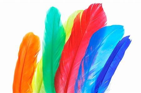 some feathers of different colors on a white background Stock Photo - Budget Royalty-Free & Subscription, Code: 400-04367610