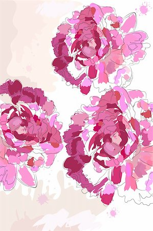 peony illustrations - beautiful blossom watercolor pink peony on white background Stock Photo - Budget Royalty-Free & Subscription, Code: 400-04368359