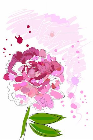 paintings of peonies - beautiful blossom watercolor pink peony on white background Stock Photo - Budget Royalty-Free & Subscription, Code: 400-04368361