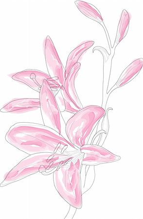 simsearch:400-04367215,k - Vector illustration of beautiful pink lilly Stock Photo - Budget Royalty-Free & Subscription, Code: 400-04368855