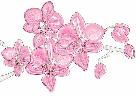 simsearch:400-04367215,k - Vector illustration of beautiful twig of pink orchid Stock Photo - Budget Royalty-Free & Subscription, Code: 400-04368864