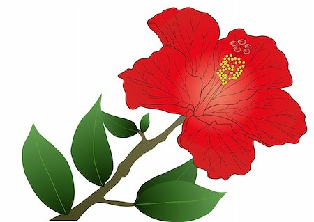 Vector illustration of red hibiscus flower with leaves Stock Photo - Budget Royalty-Free & Subscription, Code: 400-04368865