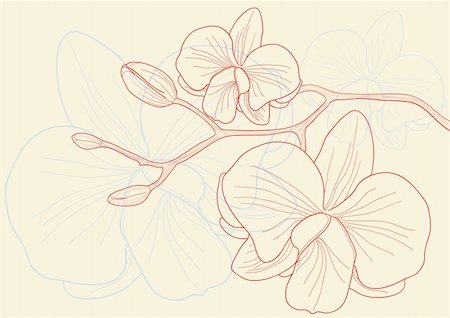 florist vector - Vector illustration of beautiful orchid flowers Stock Photo - Budget Royalty-Free & Subscription, Code: 400-04368861