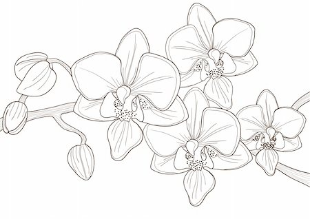 simsearch:400-04367215,k - Vector illustration of beautiful twig of orchid Stock Photo - Budget Royalty-Free & Subscription, Code: 400-04368862