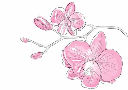 Vector illustration of pink orchid flowers Stock Photo - Budget Royalty-Free & Subscription, Code: 400-04368863