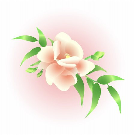 Vector illustration of beautiful wedding flowers Stock Photo - Budget Royalty-Free & Subscription, Code: 400-04368887